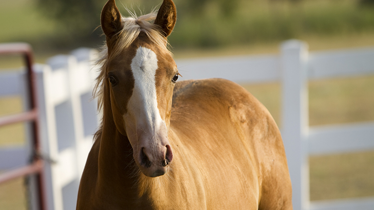 Equine-Studies-1