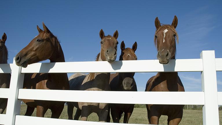 Equine-Studies-3